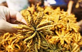 צמח מרפאה בשוק