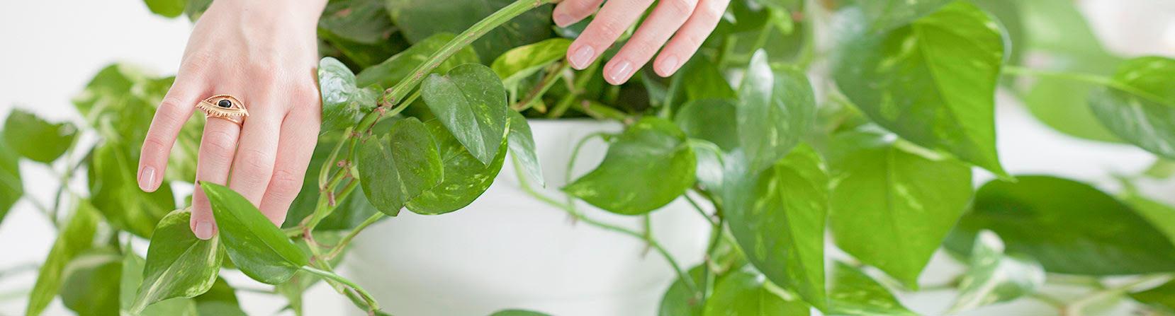 ידיים מטפלות בצמח ירוק